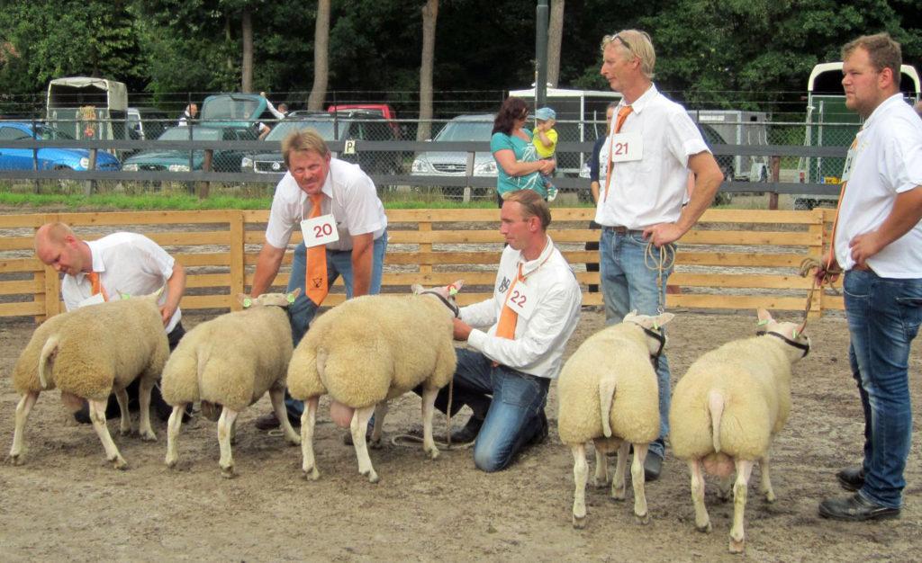 04 Keuring texelaar schapen IMG_5604